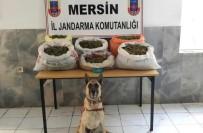 SAMANLıK - Mersin'de Uyuşturucu Operasyonu