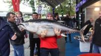 ORKİNOS - Rize'de Balıkçı Tezgahındaki Dev Orkinos Vatandaşın İlgisini Çekti