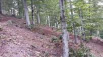 ORMAN VE SU İŞLERİ BAKANLIĞI - Sakarya'da Ormanlar Gençleşiyor