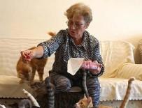 SOKAK HAYVANLARI - 80 kedisiyle kiralık ev arıyor