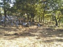 Dağyeniköy Kabristanlığı'nda Bakım Çalışması