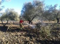ZEYTINLI - Edremit'te Zeytinlik Yangını