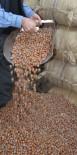 MANIPÜLASYON - Fındıkçılardan İtalya'ya Sert Tepki