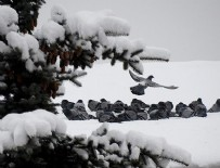 HAVA SICAKLIĞI - Kar yağışı bekleniyor