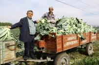 KARNABAHAR - Kış Sebzeleri Çiftçinin Yüzünü Güldürdü