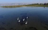 ÇEVRE VE ORMAN BAKANLıĞı - Körfez Flamingolarla Renkleniyor