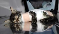 BILGE ÖZTÜRK - Otomobilin Ezdiği Yavru Kedi Protez Bacakla Yürüyecek