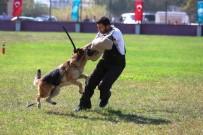 AHMET KARATAŞ - Alman Çoban Köpekleri Sokak Hayvanları İçin Yarıştı