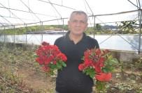 BOLAMAN - Fatsa'daki Kesme Çiçekçilerin Sorunları