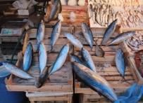 BARBUNYA - Köpek Balıklarından Kaçan Dev Palamutlar Akdeniz'de