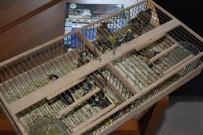 Koruma Altındaki Saka Kuşunu Yakalayanlara Ceza Yağdı