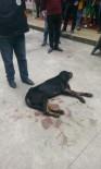 YENIKÖY - Rize'de Kavga Eden Köpekleri Ayırmak İsterken 2 Kişi Silahla Yaralandı