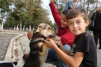 HAYVAN SEVERLER - Sokak Hayvanlarını Beslediler