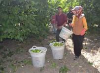 MEHMET AKıN - Tarımdaki İşçi İhtiyacını Suriyeliler Karşılıyor
