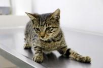 YAVRU KEDİ - Tecavüze uğrayıp işkence edilen yavru kedi öldü