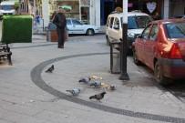 KÖPEK - İzmit Belediyesi Vatandaşları Uyardı