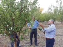 SONBAHAR - Meyve Bahçelerinde Sonbahar Bakımı