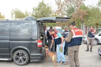 TRAFİK TESCİL - Polis Ve Jandarma Aksaray'da Kuş Uçurmuyor