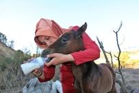 TARıM - Yaralı Atı Ölüme Terk Ettiler