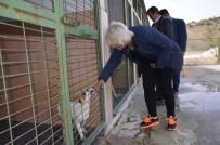 HAYVAN - Bozüyük Belediyesi Geçici Hayvan Bakım Evi'ne Ziyaret