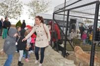 HAYVAN - Geçici Bakımevi Minik Misafirlerini Ağırladı