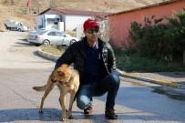 KıRKPıNAR - Ölüme Terk Edilen Köpek Sıcak Bir Yuvaya Kavuştu