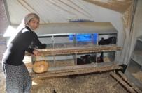 SOSYAL HİZMETLER - Kapıcı Olacaktı, Yumurta Tavukçusu Oldu