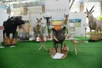 AFRIKA - Tanzanya'nın Vahşi Doğası Expo 2016'Da