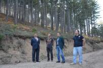 ORMAN VE SU İŞLERİ BAKANI - Kütahya'nın Ormanları Gençleşiyor