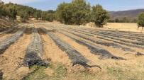 DOĞU ANADOLU - Mutki'de Çilek Yetiştiriciliği