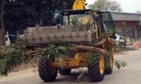 SOSYAL DEMOKRAT - Bandırma Belediyesi'ne Ağaç Tepkisi