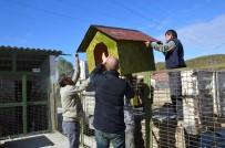 KARANTINA - Bozüyük Belediyesi Geçici Hayvan Bakımevi'ne Yeni Köpek Kulübeleri