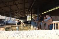 YARDIM ÇAĞRISI - İzmir'de Çiçek Hastalığı Tehlikesi