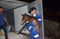 AMELİYAT MASASI - Ölüme Terk Edilen Atlar Emin Ellerde