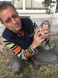 YAVRU KEDİ - Sorgun'da Kedi Yavrularına İtfaiye Ekipleri Sahip Çıtı