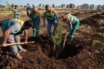 KENT ORMANI - Tahir Elçi Kent Ormanı'na 25 Bin Ağaç Dikildi