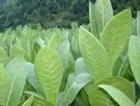 ORGANİZE SANAYİ BÖLGESİ - Sigara kağıdı üretimine düzenleme