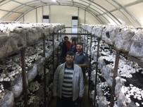 KÜLTÜR MANTARı - Beyşehir'de Hibeden Yararlanan Genç Çiftçiler Kültür Mantarı Yetiştiriyor