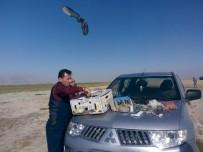 YIRTICI KUŞ - Tuzakçı Avcılar Yakalandı