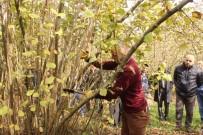 DEMIRLI - Fındık Bahçelerinde Eğitici Adayları Eğitildi