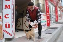 HEKIMOĞLU - Sokak Kedisini Tavuk Dönerle Besliyor