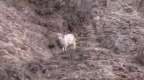 HALITPAŞA - Kayalıklarda Mahsur Kalan Keçiyi İtfaiye Kurtardı