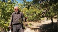 GARIBAN - Kendi Kurduğu Ormanın Satılmasını İstemiyor