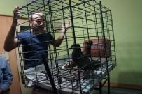 HAYVAN SEVERLER - Lapseki Güvercin Severler Derneği Mezadını Yaptı