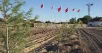 Şefaatli Alifakılı Köylüleri 15 Temmuz Şehitler Hatıra Ormanı Oluşturdu