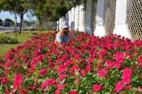 KONAKLı - Alanya'ya 200 Bin Çiçek