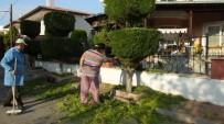 Burhaniye'de Vatandaşlar Ağaçları Tablo Gibi Yaptı