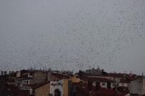 SIĞIRCIK - Eskişehir Semalarında Kuşların Dansı Büyüledi