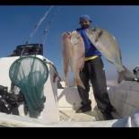 FENOMEN - Oltasına Köpekbalığı Takıldı