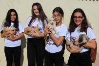 SOKAK HAYVANI - 4 Ekim Hayvanları Koruma Günü Kutlandı